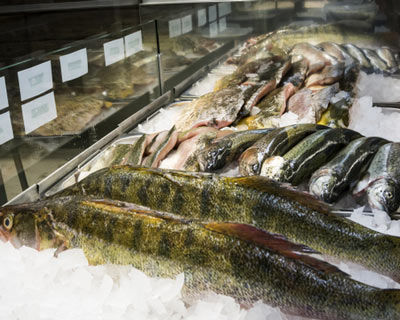 Násadové ryby prodej